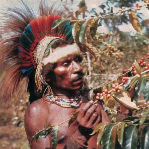 Papua New Guinea Purosa AA