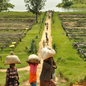 Rwanda Musasa
