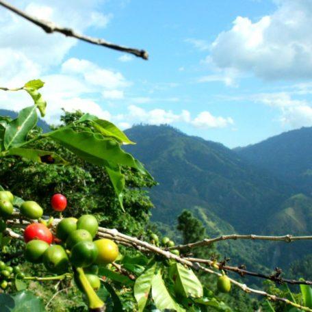 blue-mountains-jamaica-810×629