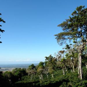 Panama Hacienda La Esmeralda Special
